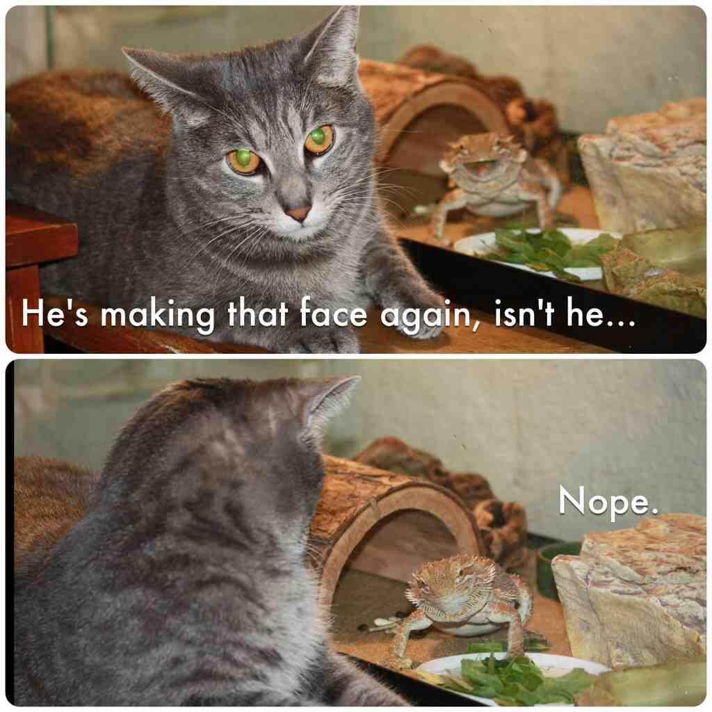 ✅ 25  Best Memes About Huehuehuehue | Huehuehuehue Memes