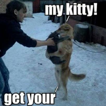 Giving My Dog Ensure