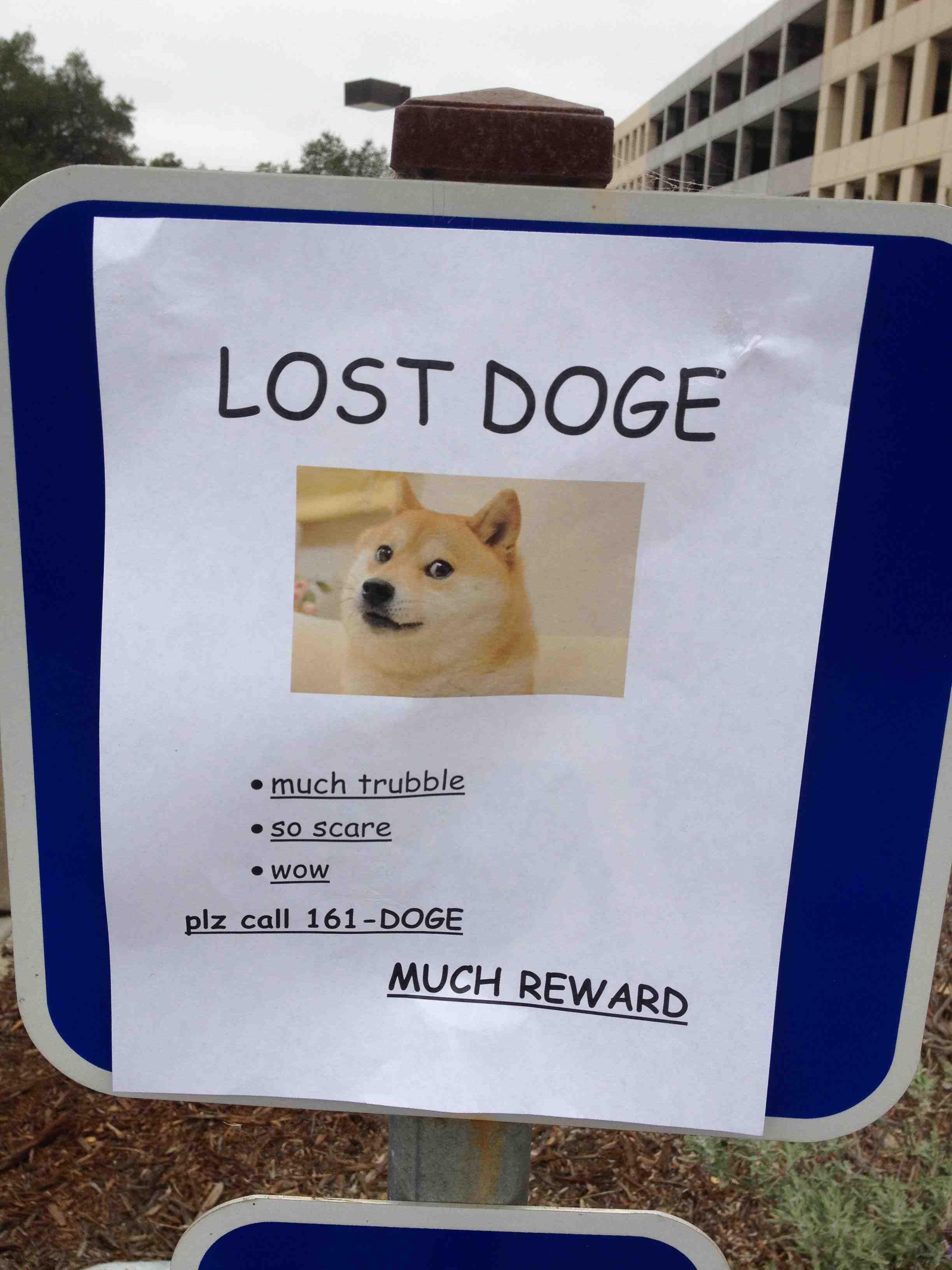Lost Doge Meme ! Much Trouble, So Scare, Wow