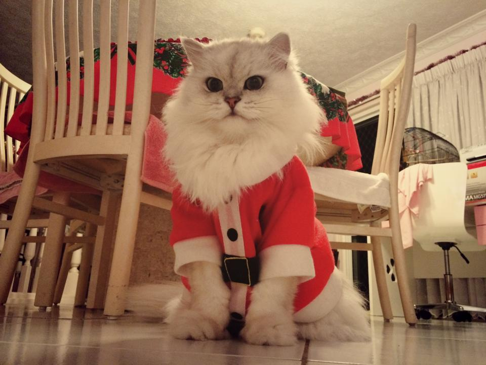 santa cat is angry you ve been naughty all year long