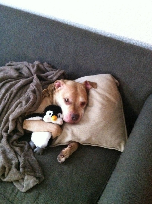 Sick Dog Warming Up With Its Blanket Soul Mate Penguin sick dog warming up with its blanket & soul mate penguin,Cute Sick Memes