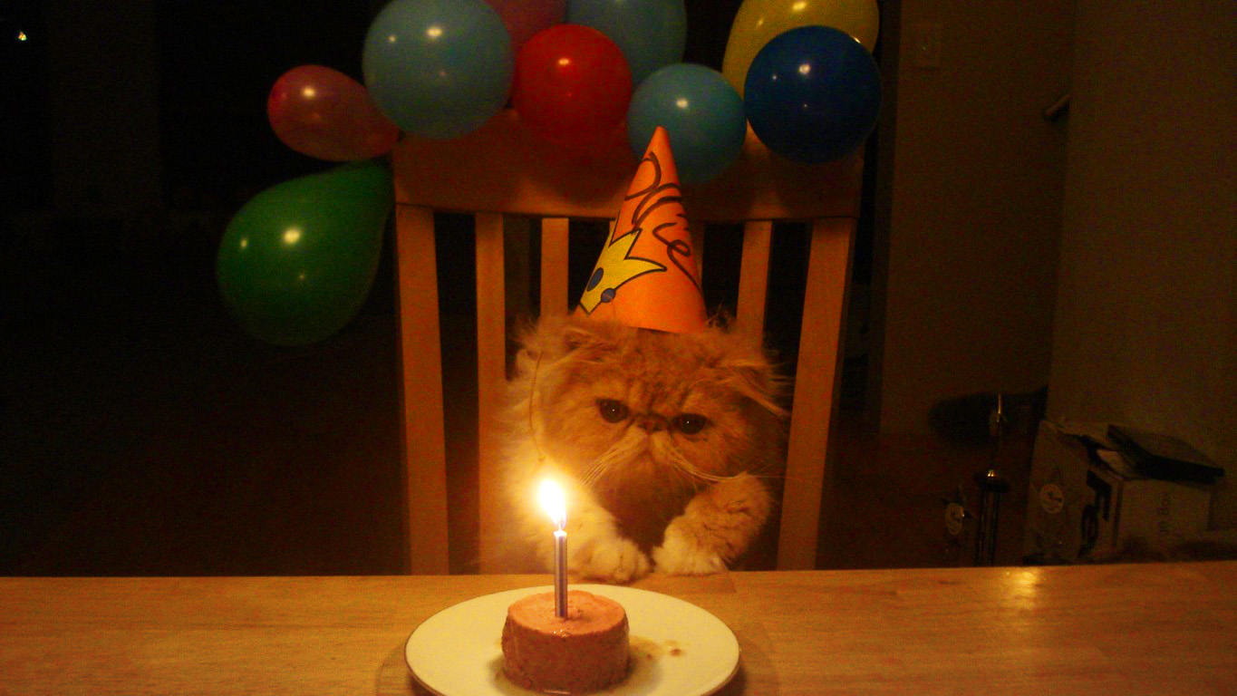Birthday Cat Wonders Why Its Tuna Is On Fire
