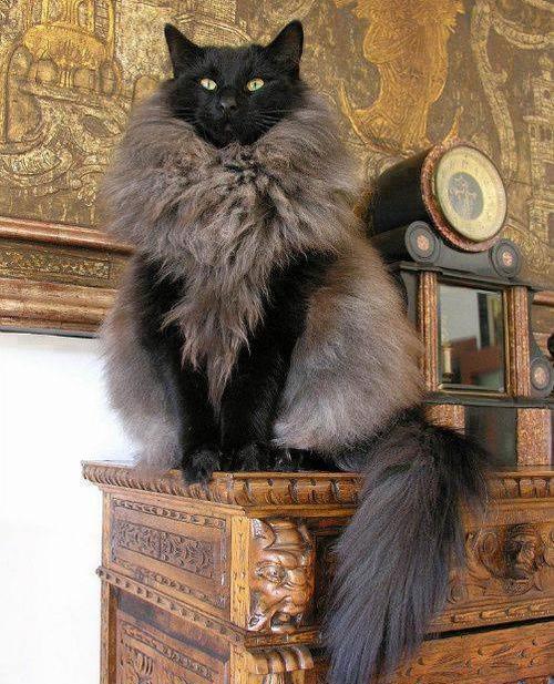Cat Food Pedestal